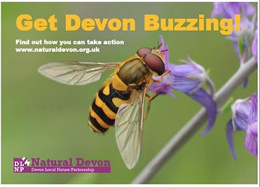 get devon buzzing.jpg