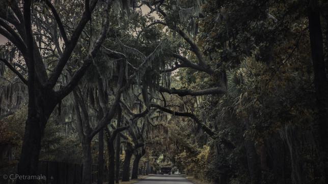 Savannah GA Street