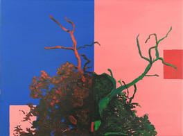 træet colorustudy