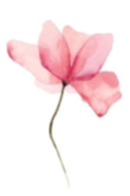 Pink-Flower-Zaza-Ensar-Oud.jpg
