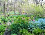 woodland_at_TNG.jpg