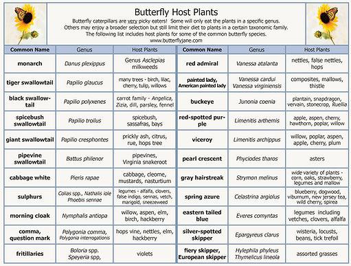 Butterfly_Host_Plants_chart_photo.jpg