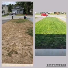 Complete Lawn Renovation