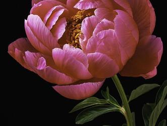 A flor sempre quer ser flor