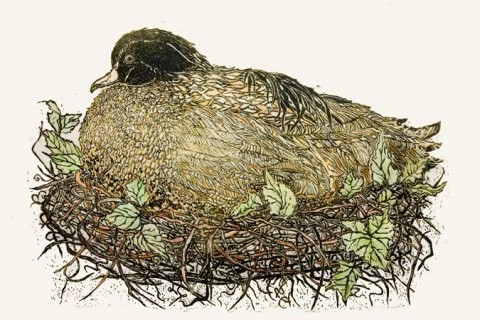 Nesting Duck by Millicent Krouse