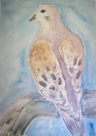 Dove by Amanda Moseley