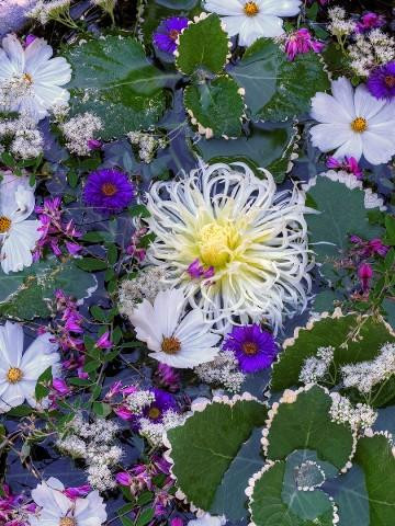 """Bruce Lewis.  """"Floating Flowers"""".  Digital archival print."""