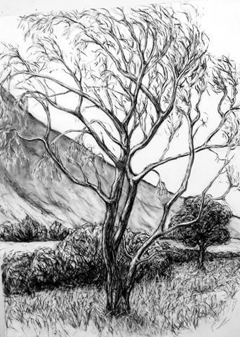Old Poplar by Alysa bennett.