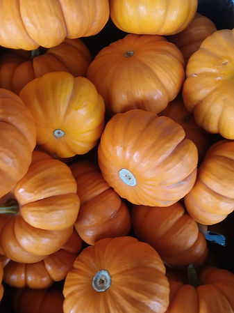 mini pumpkins 2018.jpg