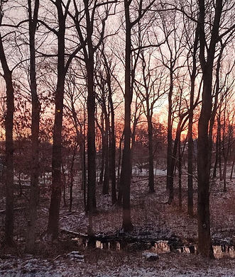 winter sunrise 2019.jpg