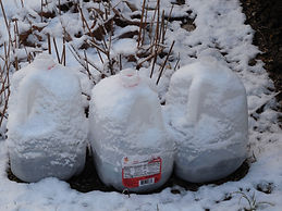 Winter sowing Jan 2020.JPG