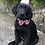 Thumbnail: Glitter hat and bow (Small & Medium dogs)