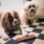 dog bakery, handmade dog biscuits