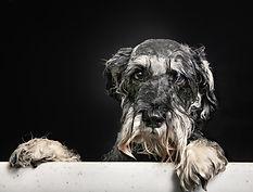soggy doggy dog shampoo