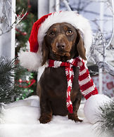 seasonal gifts for dogs, valentines