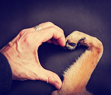 a person and a dog making a heart shape
