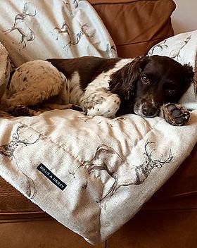 luxury dog gifts