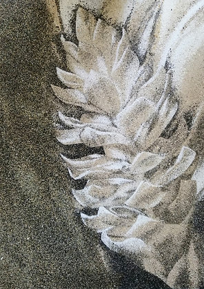 Tableau de sable d'une Alpinia