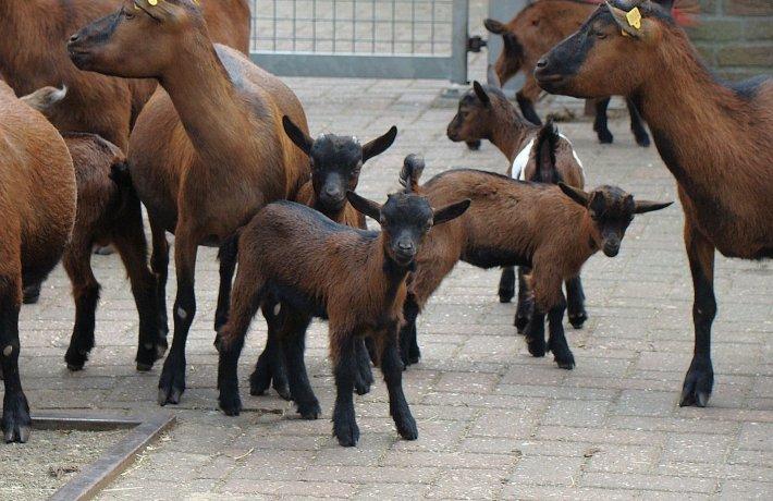Kinderboerderij Geitjes
