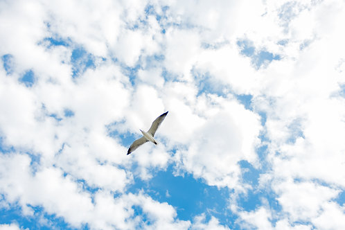 Seagull - COMMERCIAL LICENSE