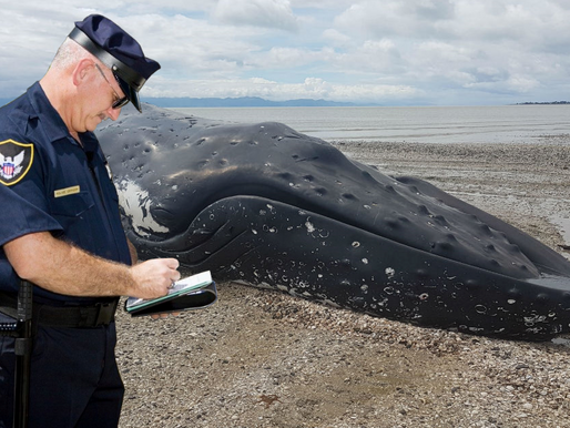 Beached whale cited for not wearing mask on public beach