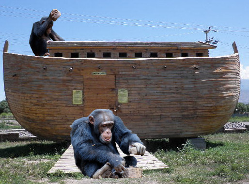 Chimpanzees seen building Ark; The Age of Man has ended.