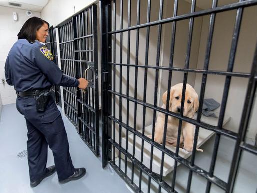 Kamala Harris hid evidence exonerating puppy