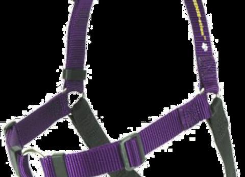 Softtouch-Geschirr M/L 1 in lila