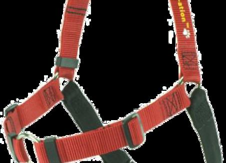 Softtouch-Geschirr M/L 1 in rot