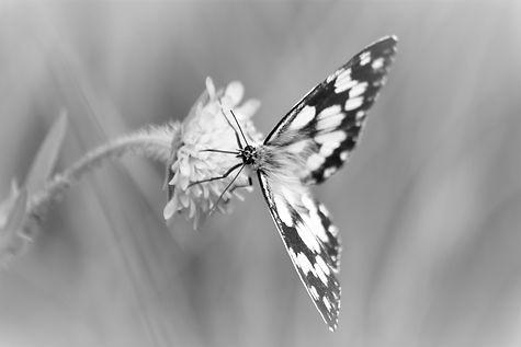 Schmetterling Fotogrusskarte, Dekoshop in Rikon Zell