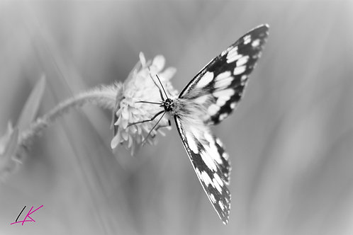 Fotogrusskarte Schmetterling
