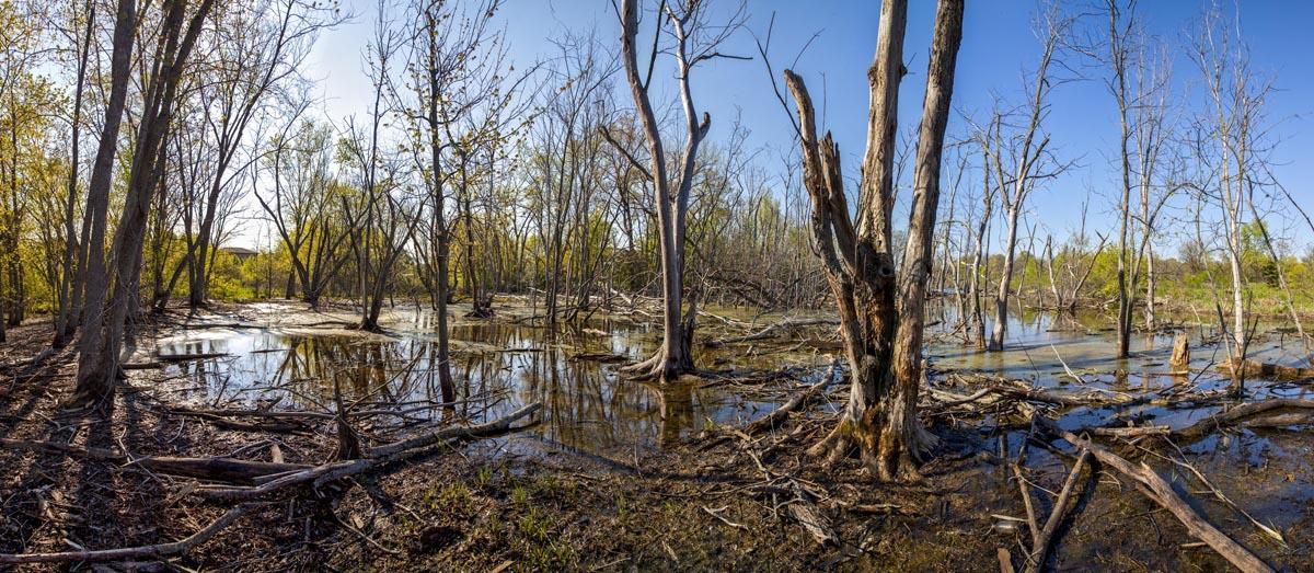 Orland Park Swamp #3 2016