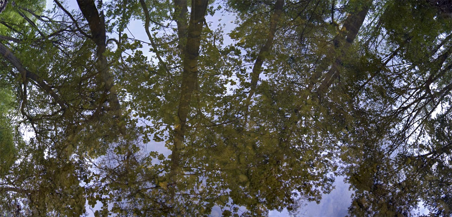 5-19-11 Route 83 Woods Reflection #2