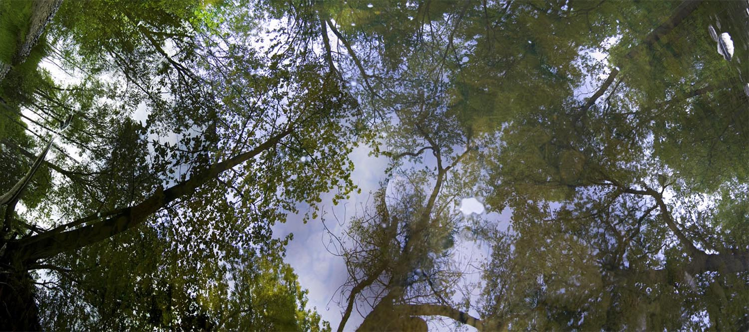 5-19-11 Route 83 Woods Reflection #1