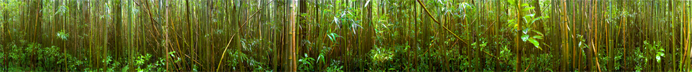 Round Top Bamboo Forest (complete)