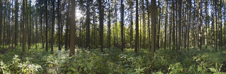 Morton Arboretum 2011