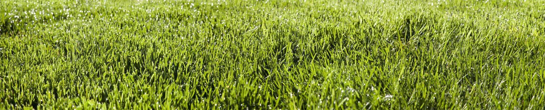 5-3-16 9 am Grass #1