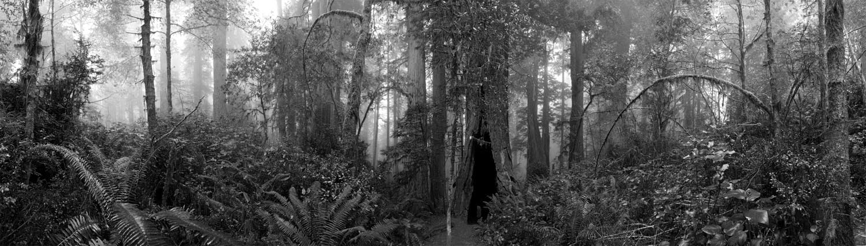 Redwoods National #1, CA