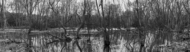 Orland Park Swamp #1 2016