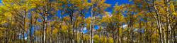 Aspens Of Estes Park #1