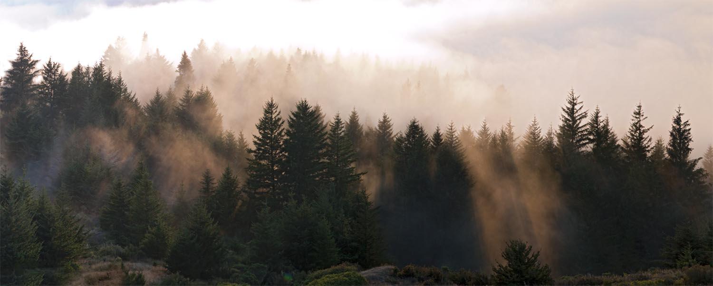 Komorebi Light Through Trees 2014