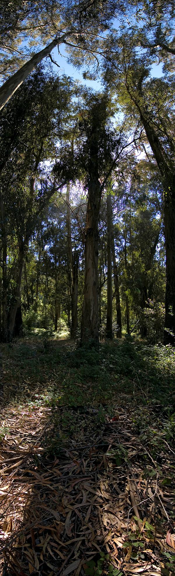 Berkeley CA #4