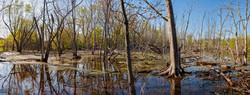 Orland park Swamp #4 2016