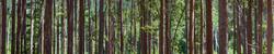Boulder Woods, CO