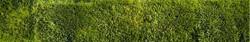 4-23-06 Mowed Grass