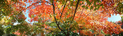 Illinois Foliage 2008