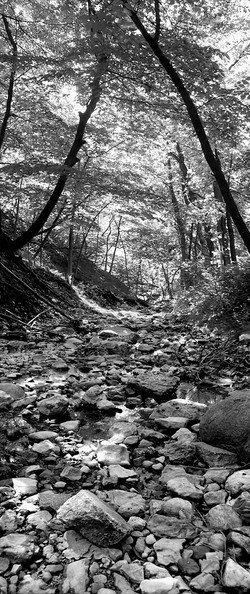 Forest Path 2005