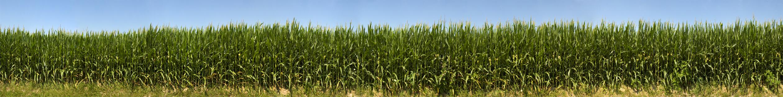 Monticello Indiana Corn 2010