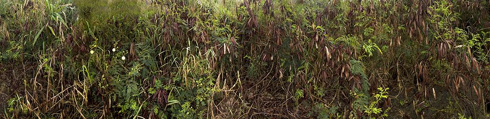 Trail Green 2008