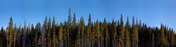 Breckenridge Tree Line 2016